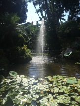Waterfall in the botanical gardens
